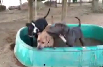 LB dog pool thumbnail